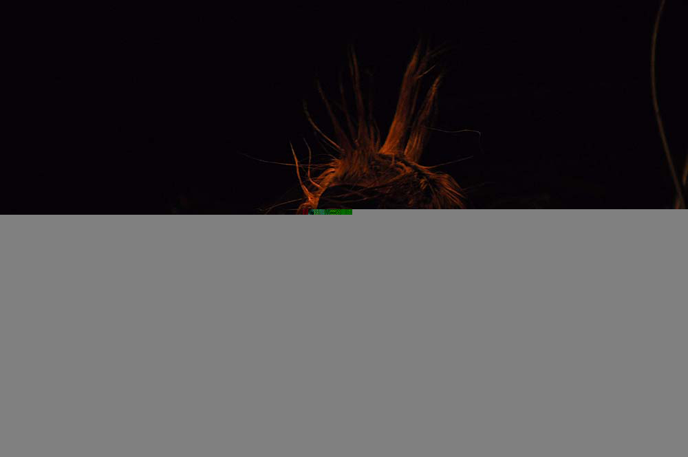 the-casualities-asbury-18-08-2014-12